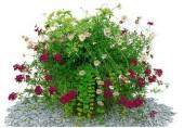 Okrasné květiny
