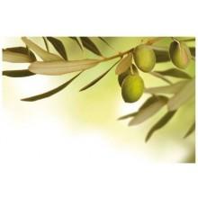 KELA Prostírání PICTURE oliva KL-15036