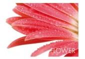 KELA Prostírání PICTURE červený květ KL-15039