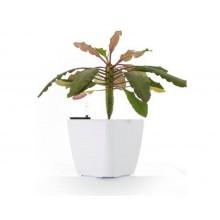Samozavlažovací květináč G21 Cube bílý 22cm 6392410