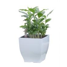Samozavlažovací květináč G21 Cube mini bílý 13,5cm 6392570