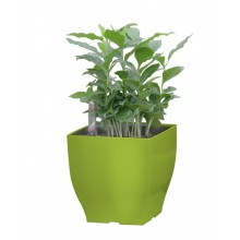 Samozavlažovací květináč G21 Cube mini zelený 13,5cm 6392575