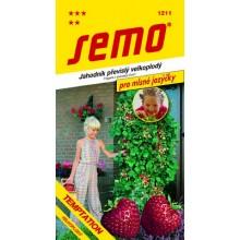 SEMO Jahodník TEMPTATION 1211