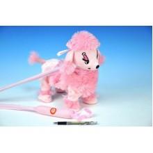 Pejsek pudl růžový chodící a hrající plyš na baterie 30cm na tyčce 56330040